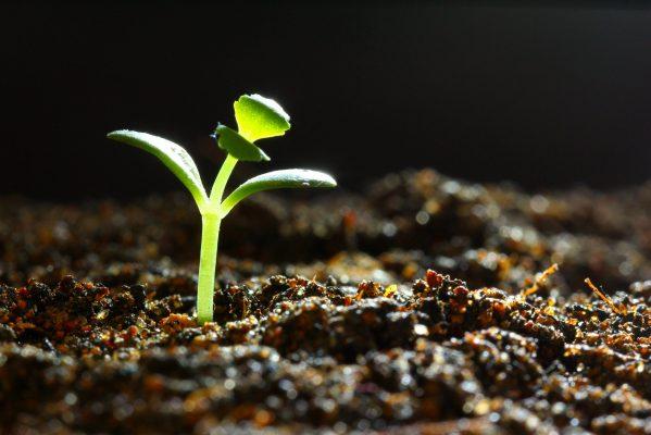 Groeiend-plantje